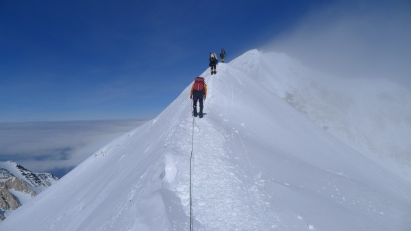 Ascending the summit ridge of Denali, June 15. Photo by Nikki Milonas.
